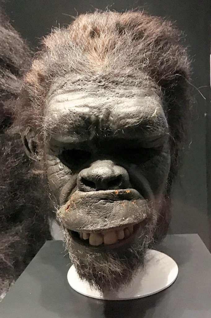 Ape costume from 2001: A Space Odyssey at Stanley Kubrick: The Exhibition
